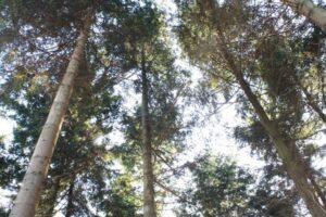 woodshed tree planting scheme dorset